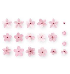 realistic sakura or cherry blossom japanese vector image