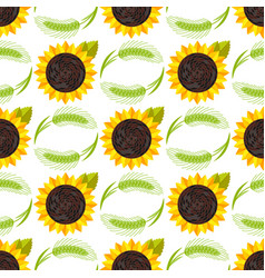 rye wheat harvest ears of golden sunflower vector image