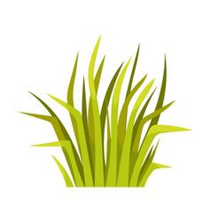 Bunch grass on a white vector