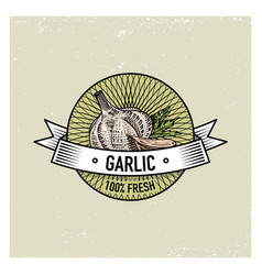 garlic vintage set of labels emblems or logo for vector image