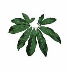 Tropic leaves green exotic foliage vector