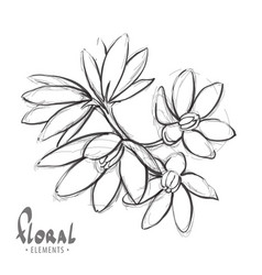 sketch a delicate flower vector image vector image