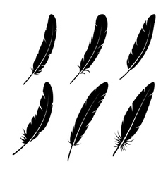 group feather on white background vector image