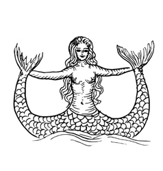 Mermaid or siren vector