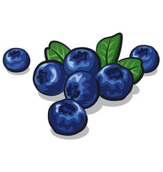 Ripe fresh blueberry vector