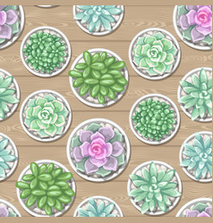 seamless pattern with succulents echeveria jade vector image