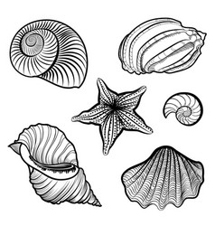 Various seashell starfish sea shell marine life vector