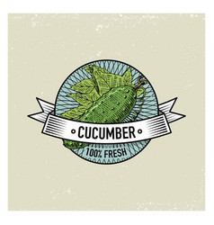 Cucumber vintage set of labels emblems or logo vector