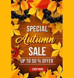 Autumn sale discount poster vector