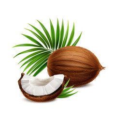 Coconut realistic image vector
