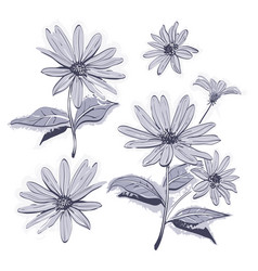 drawing flowers hand-drawn chamomiles daisies vector image