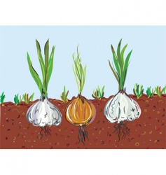 garlic and onion vector image