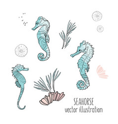 seahorse cute marine animals vector image