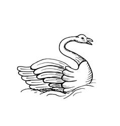 Hand-drawn sketch of swan vector image vector image