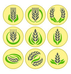 cereal ears and grains agriculture industry or vector image