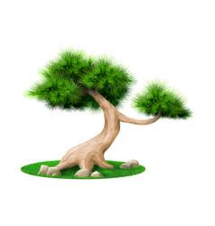 Decorative bonsai tree pine isolated vector