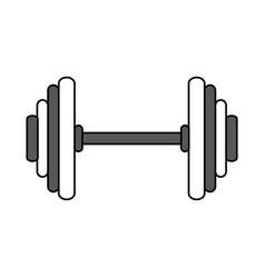 dumbbells sport gym flat vector image vector image