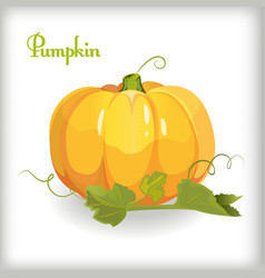 Cartoon pumpkin with leaves vector image vector image