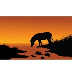 Silhouette of one zebra in riverbank vector image vector image
