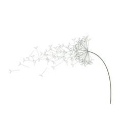 A light coloured green dandelion vector
