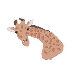 giraffe head color vector image