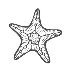 starfish nature ocean vector image
