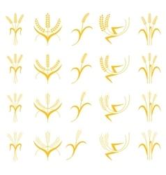 Set Ears of Wheat Barley or Rye vector image