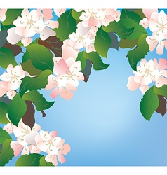 Apple blossom background floral vector image