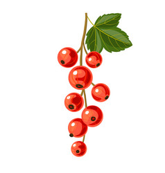 Branch of red currant vector
