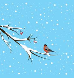 bullfinch under the snowfall vector image