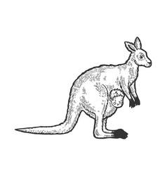 kangaroo with human basketch engraving vector image