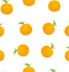 Oranges on white vector image