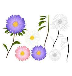 Purple pink and white aster outline vector