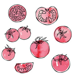 watercolour whole tomato tomato slices half of vector image