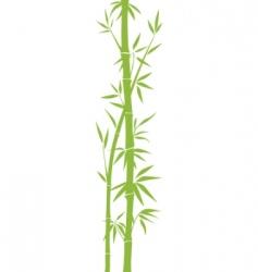 bamboo vector image vector image