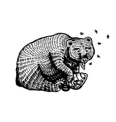 grizzly brown bear eats honey in a wild animal vector image