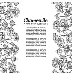 Chamomile drawing frame isolated daisy vector