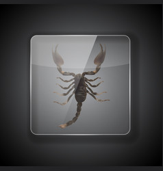 Glass frame on dark background with scorpion vector