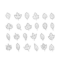 leaves set sketch environment nature vector image