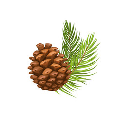 Pine branch with cone vector