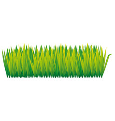 green tall grass icon vector image