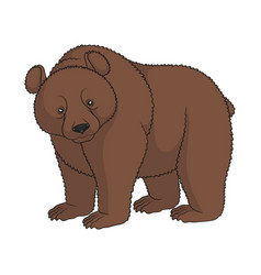 color image of a brown bear isolated object vector image vector image