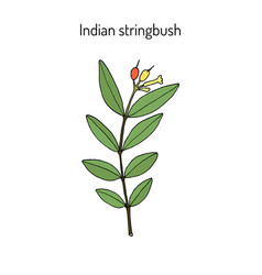 indian stringbush wikstroemia indica or tie bush vector image