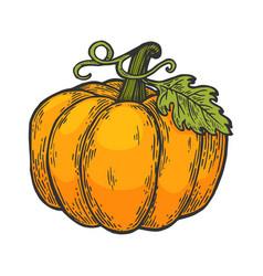 pumpkin color sketch engraving vector image