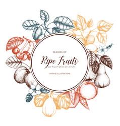vintage fruits card design vector image