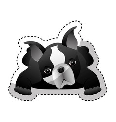 cute french bulldog icon vector image