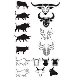 beef cows bulls vector image