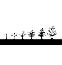 Cannabis plant growth stages silhouette on white vector