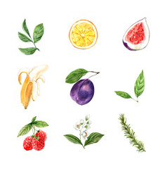 Set watercolor foliage floral fruit on white vector