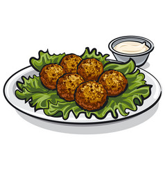 Traditional falafel with lettuce vector
